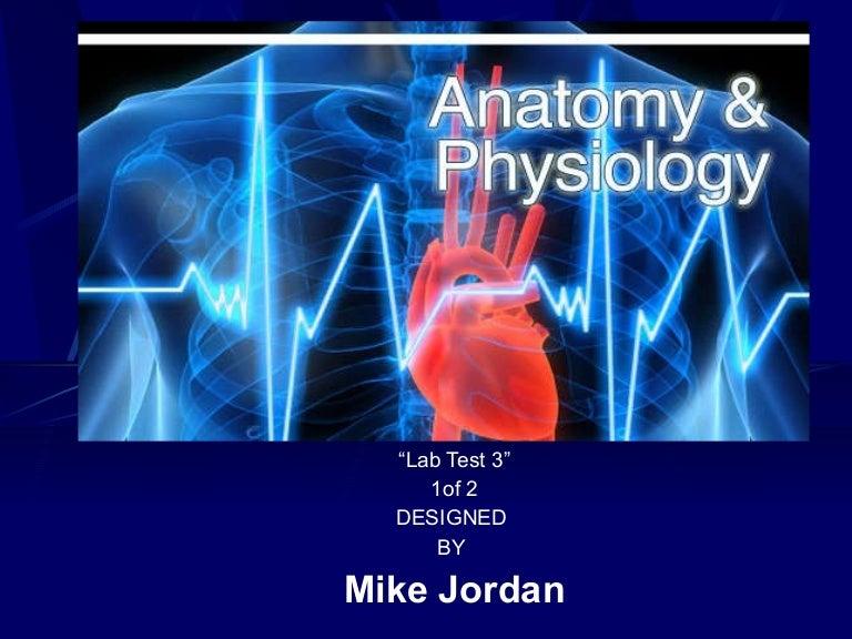 Anatomy & Physiology Ii Lab Test 3 1 2