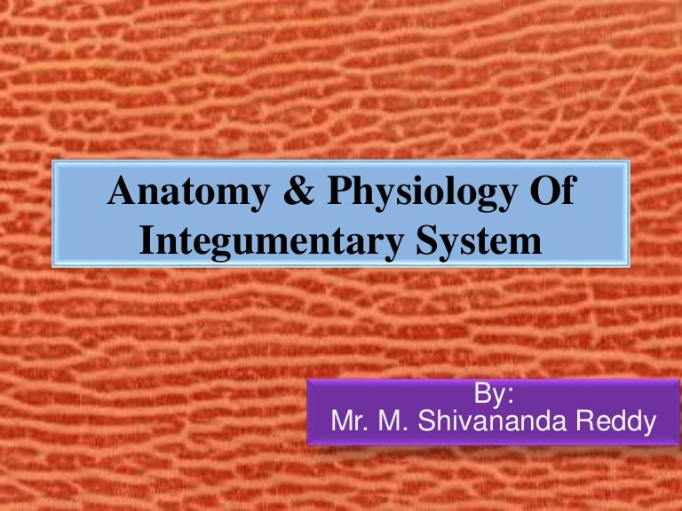 Anatomy & physiology of integumentary system