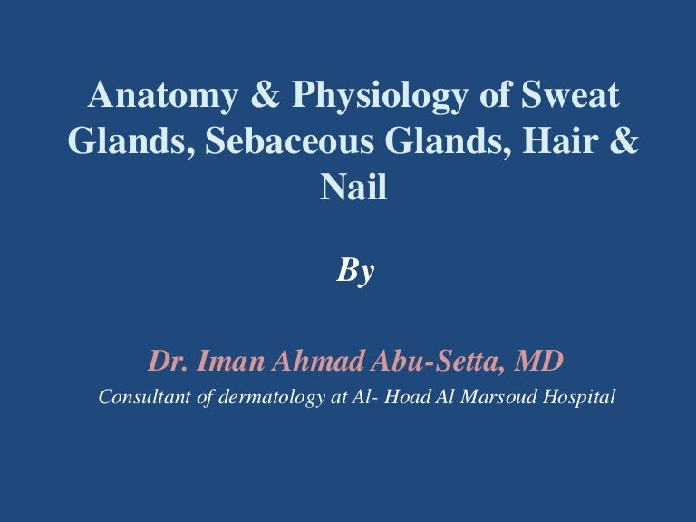 Anatomy Physiology Of Sweat Glands Sebaceous