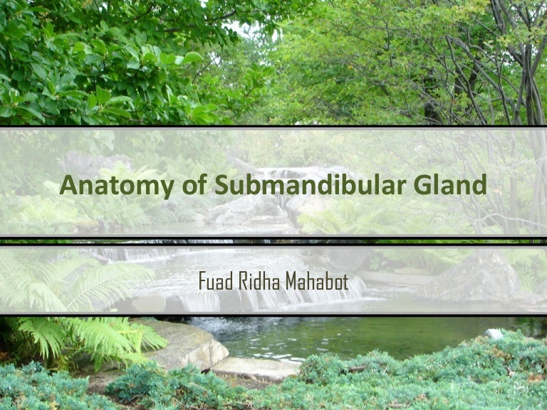 Anatomy of Submandibular Gland