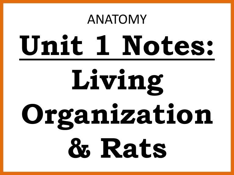 Anatomy Unit 1 Notes: Living Organization & Rats