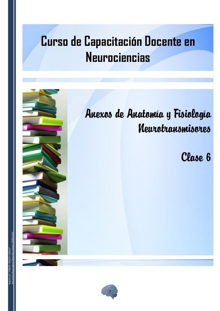 Anexos de anatomía y fisiologia neurotransmisores
