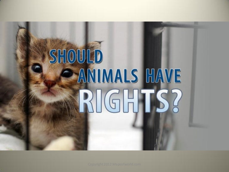 should animals have rights facts stats infographic