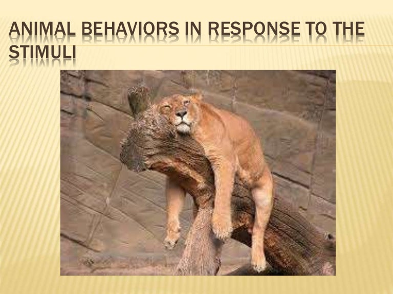 Animal behaviors in response to the stimuli p.4