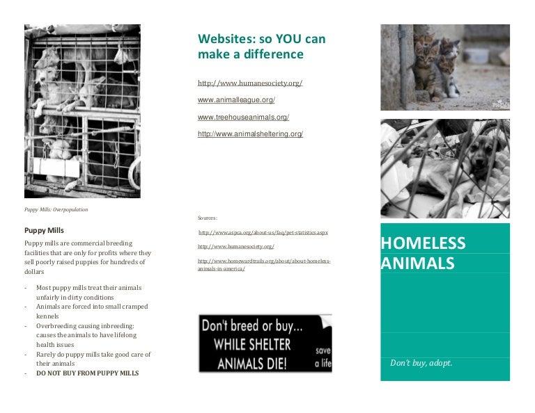 Homeless Animal Brochure