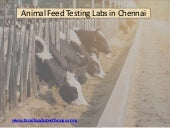 Animal Feed Analytical and Quality Assurance Laboratory in Chennai