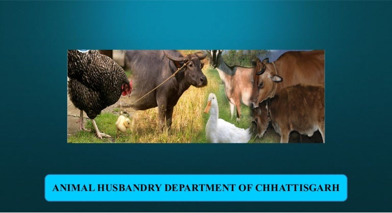 animal husbandry department of chhattisgarh