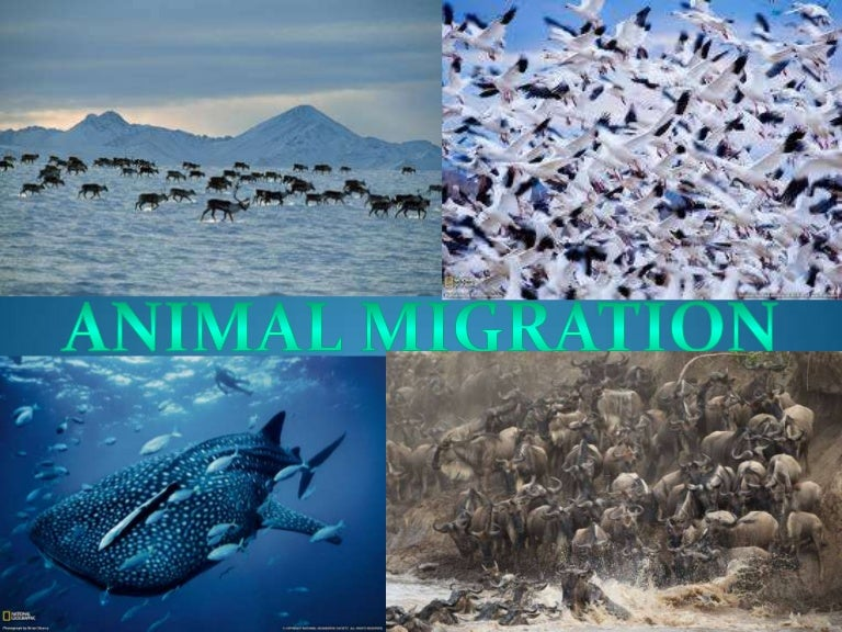 Climate Change Threatens Thousands of Species in Our ...