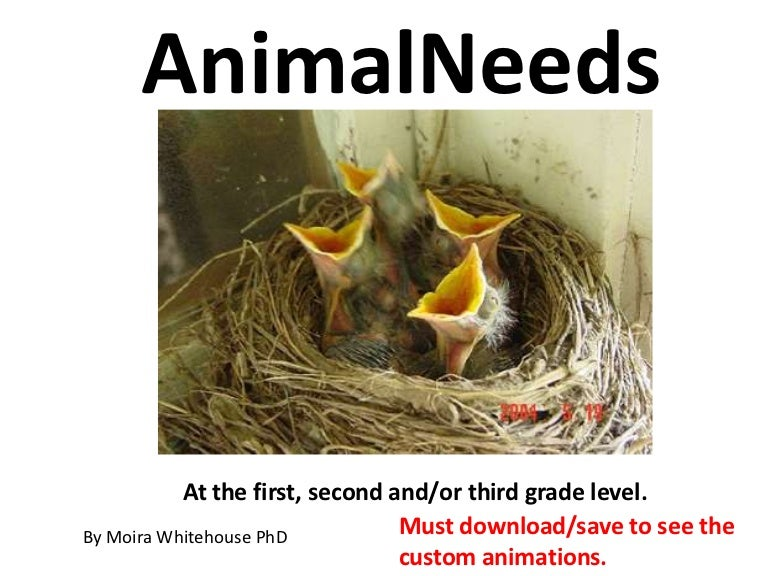 animal needs teach 1st 2nd 3th grades