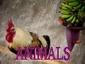 Animals photography (catherine)