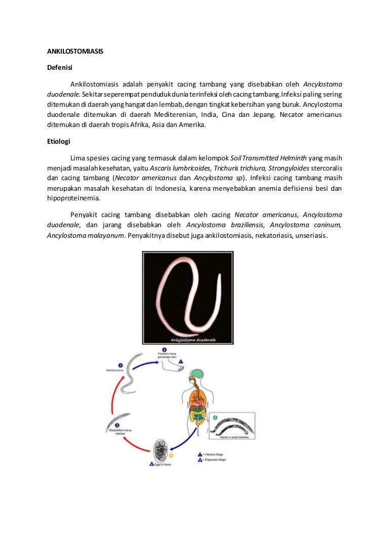 Ankilostomiasis invazív stádium