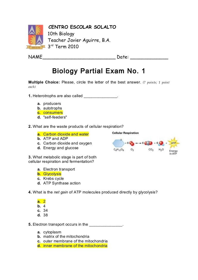 All Grade Worksheets Photosynthesis And Cellular Respiration – Photosynthesis Cellular Respiration Worksheet