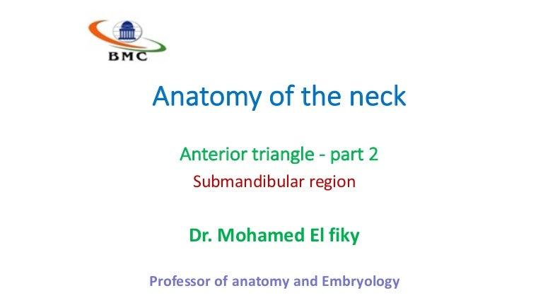Anterior triangle part 2
