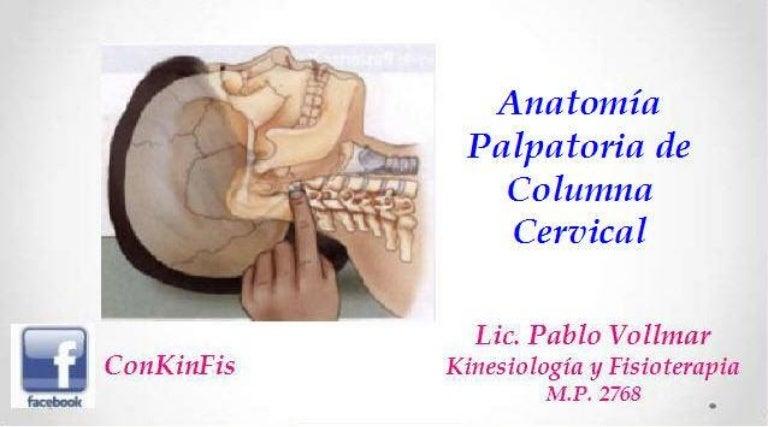 Anatomia Palpatoria Columna Cervical