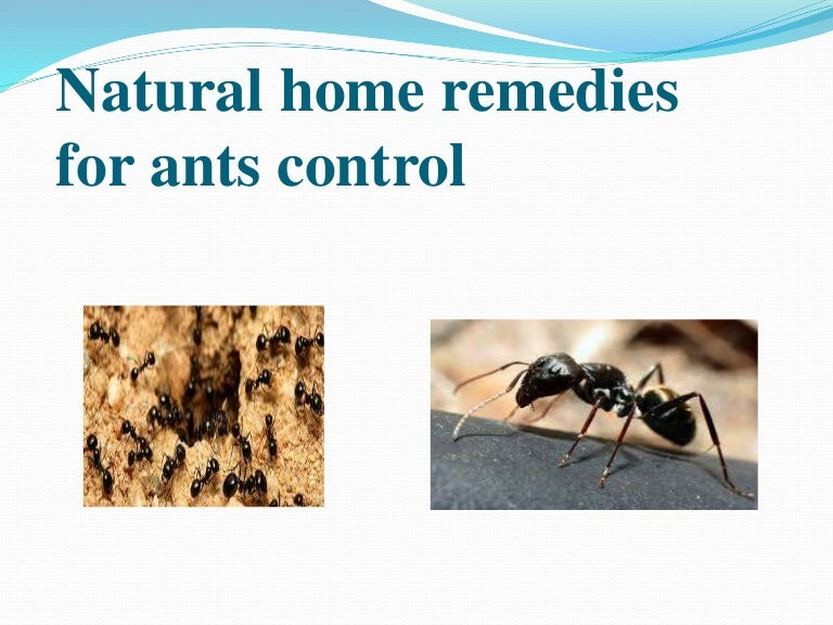 Natural Home Remedies For Ants Control