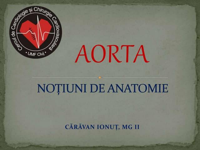 Anatomia Aortei