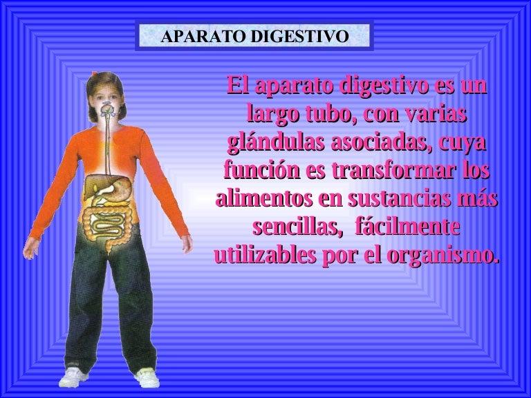 aparato-digestivo-40789-17450-thumbnail-4.jpg?cb=1177115645