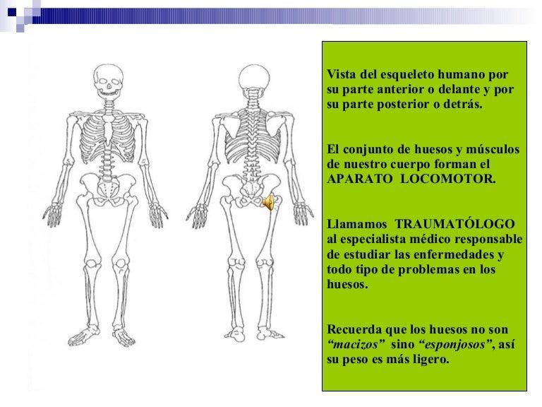 como se lumbre el doctor entendido linear unit huesos articulaciones y músculos