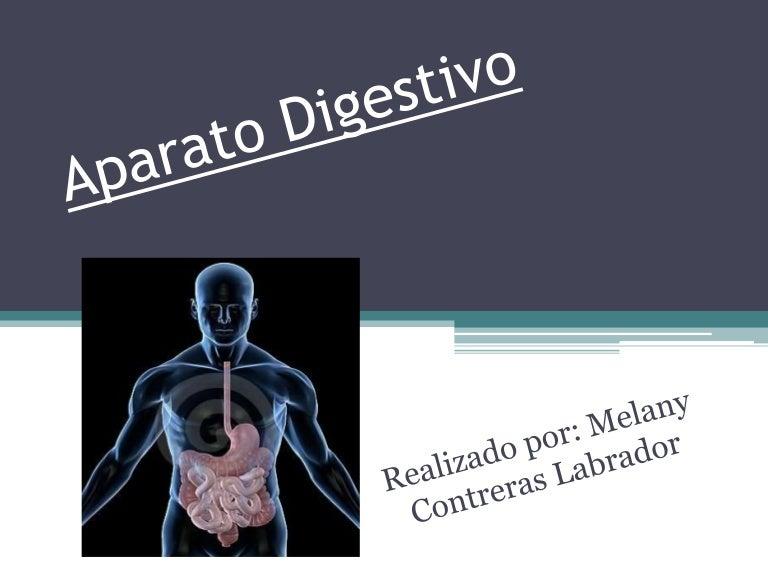 Aparato Digestivo Caracteristicas Y Funciones De Cada Una De Sus Part