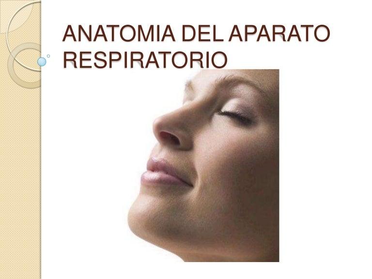 Aparato respiratorio anatomia.
