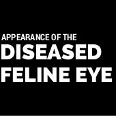 Deborah Y. Strauss DVM: Appearance of the diseased feline eye