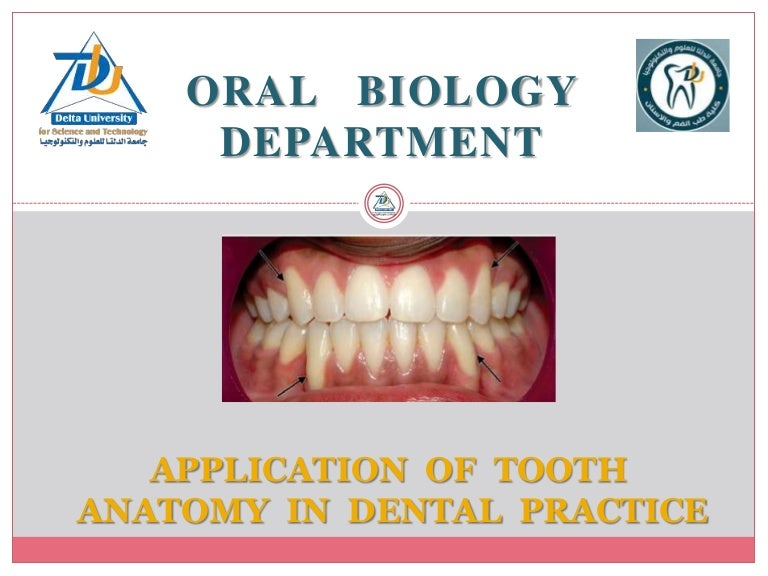 Application of tooth anatomy in denta practice