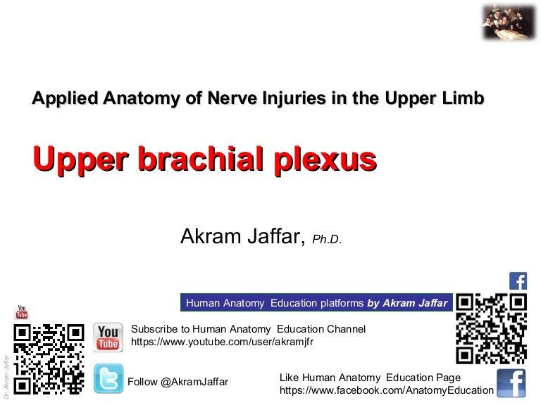 Applied Anatomy Upper Brachial Pleuxs Injury