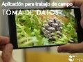 Aplicación para trabajo de campo: Toma de datos