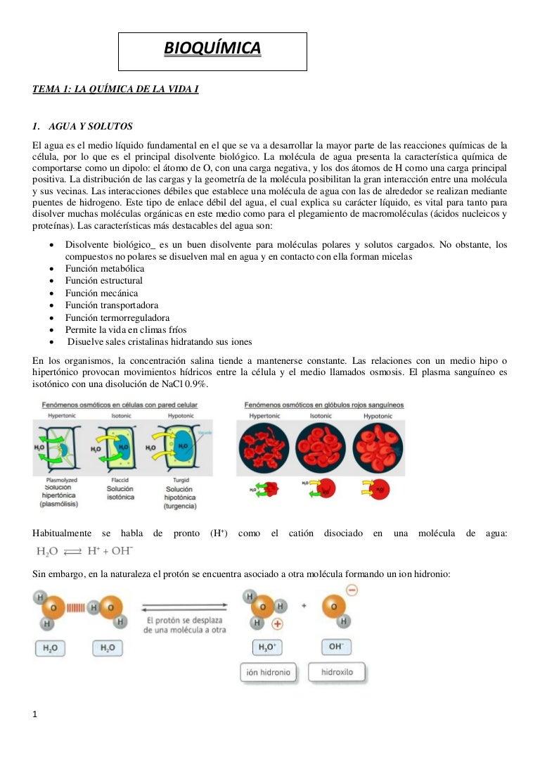 bioquímica vía glucolítica diabetes