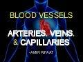 Blood vessels: Arteries, Veins and Capillaries