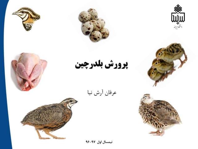 Arashnia quail