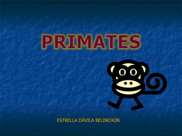 Arbol primates