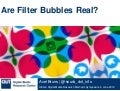 Are Filter Bubbles Real?