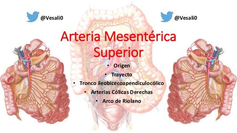 Anatomía - Arteria mesentérica superior (Arterias Cólicas, Arco de Ri…