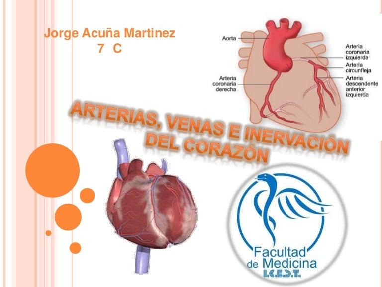 Arterias, venas e inervación del corazón