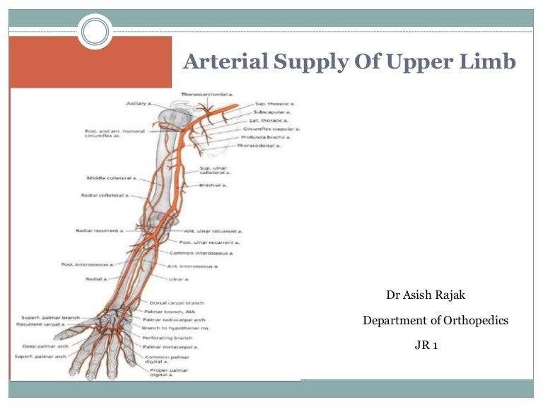Arterial Supply of Upper Limb