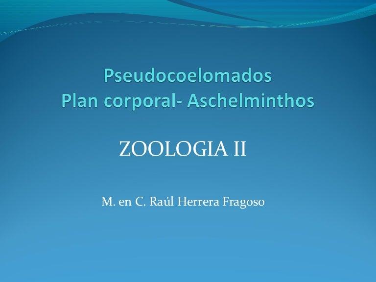 a pseudocoelomate testtervezésű aschelminthes