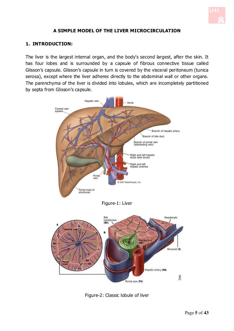 A simple model of the liver microcirculation