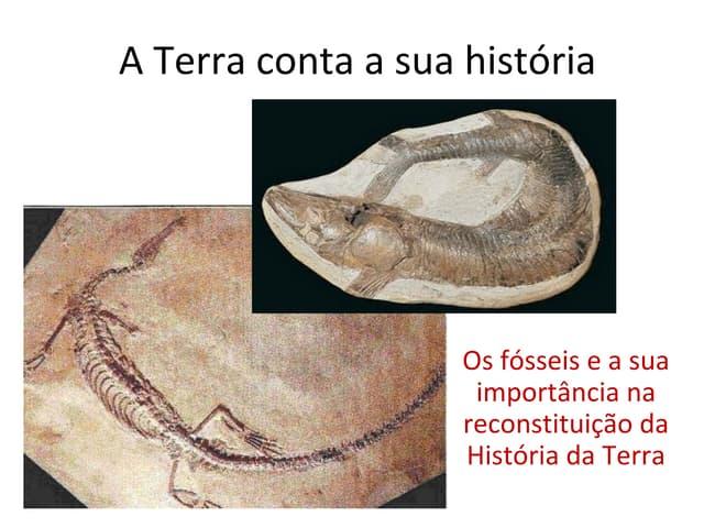 A terra conta a sua história   os fósseis