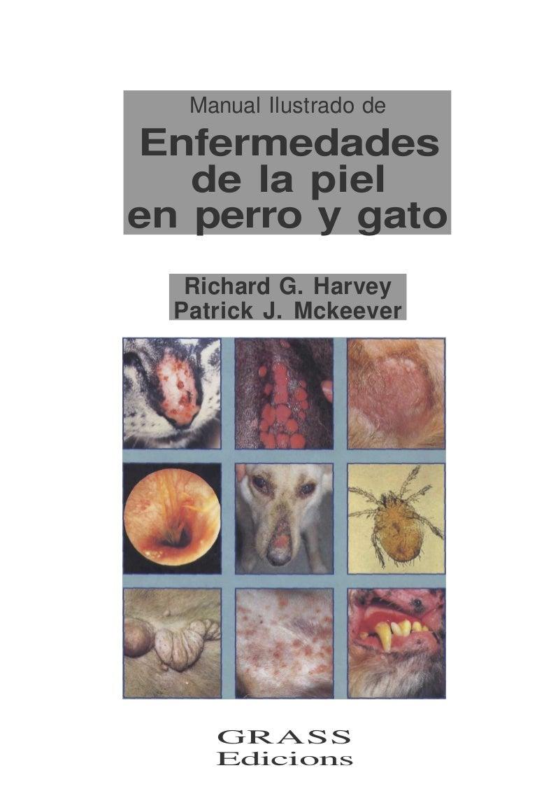 enfermedades de la piel en gatos domesticos