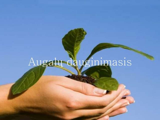 Augalų dauginimasis. Biologija