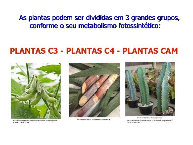 Aula 10 plantas c3 c4 cam pdf