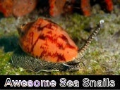 Awesome Sea Snails!