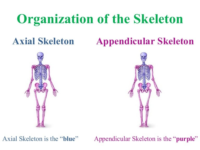 Venn Diagram Of Axial And Appendicular Skeleton - All Kind Of Wiring ...