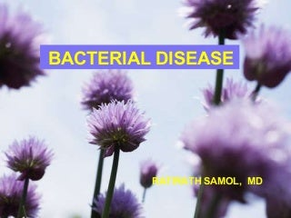 Bacterial Infection (แพทย์)