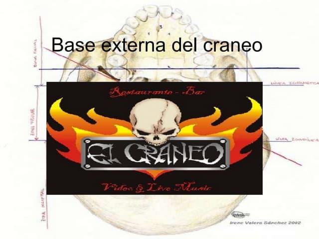 Base Externa Del Craneo