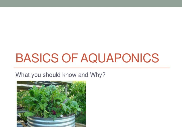 Basics of aquaponics - Aquaponics4you review