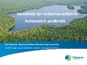 Incentives for collective action in Indonesia's peatlands