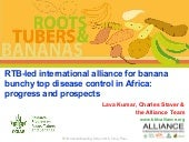 RTB-led International Alliance for Banana Bunchy Top Disease Control in Africa: Progress and Prospects