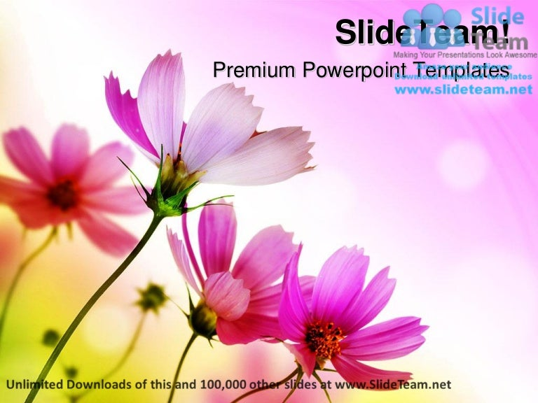 Beautiful Pink Flowers Beauty Power Point Templates Themes And Backgr